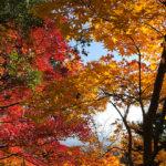 紅葉は今年もきれいです